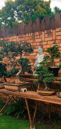 bonsai nursery